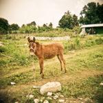 Holga_Haiti_005